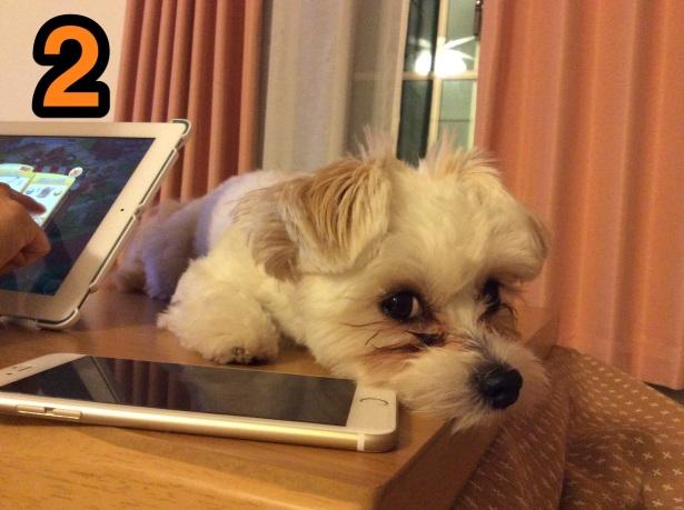 iPhone6Plusとビッケ